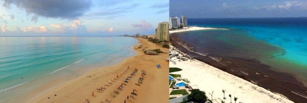 Good news for some Cancun beaches, with sargassum coming under control.